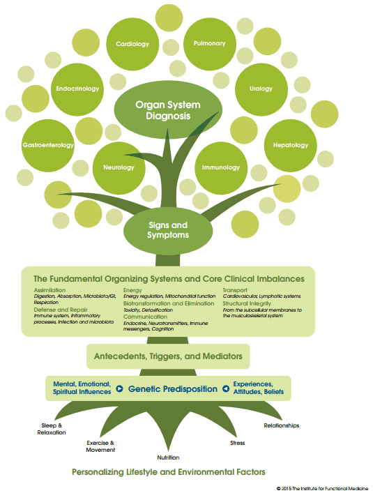 Functional Medicine Tree showing causal factors leading to diagnosis as used by Fairfield Nutrition and Functional Medicine Melbourne