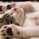Kitten sleeping - stretched out, relaxed